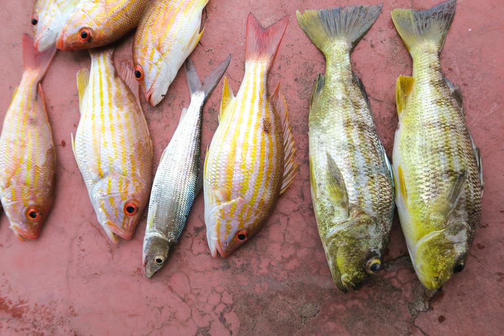 Guatemala Fish